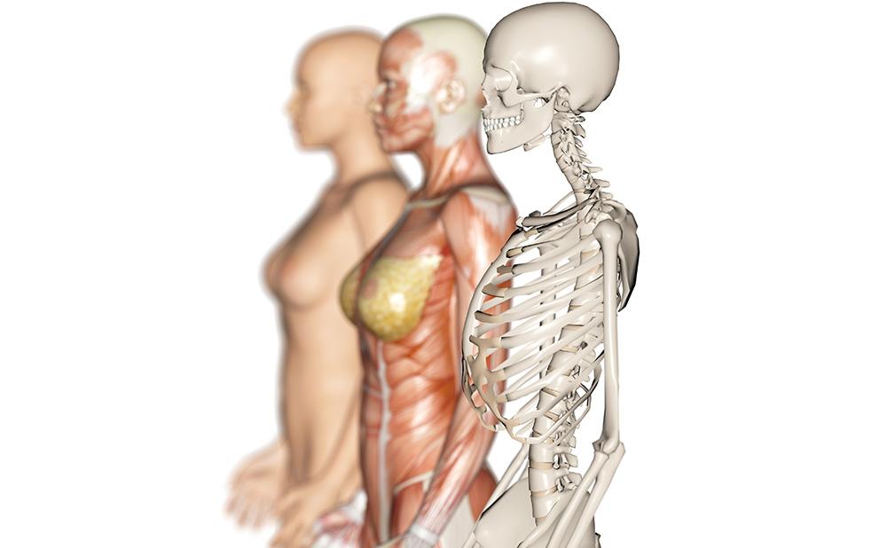 アプローチするのは、不調のある部分だけではありません。筋膜や骨格、内臓や頭蓋など、身体を構造する重要な要素を総合的に見ていき、不調の原因を探り施術を行います。 そのため、施術後は「痛かったところ」だけでなく、身体の歪みに起因していた肥満やむくみも緩和されるなど、美容面においても効果が期待できます。 日常的な施術メニューはもちろん、ブライダルなどの特別な日を迎えるためのメニューもご用意しています。